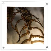 Summer Leaf , Acrylic Print