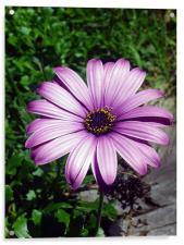A flower, Acrylic Print