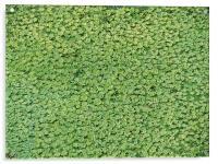 green carpet, Acrylic Print