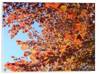 Leaves , Acrylic Print
