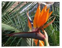 Bird of Paradise Crop, Acrylic Print