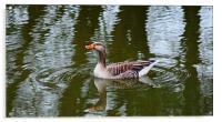 Duck, Acrylic Print