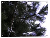 tree, Acrylic Print