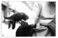 pigeons2, Acrylic Print