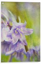 Textured Bluebells, Acrylic Print