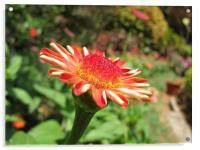 flower , Acrylic Print