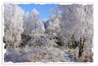 Winter Crystals in Snow, Acrylic Print