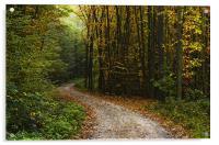 Forest walk, Acrylic Print