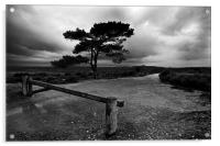 New Forest, Acrylic Print