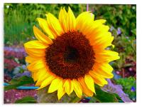 Sun Flower, Acrylic Print