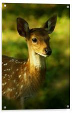 Little Bambi Deer, Acrylic Print