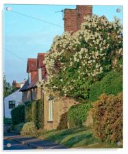 Cottage , Acrylic Print