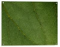 Leaf closeup , Acrylic Print