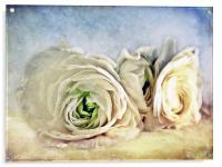 Resting Ranunculus, Acrylic Print
