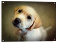 Puppy Love, Acrylic Print