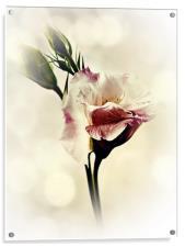 Lovely Lisianthus, Acrylic Print