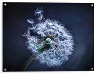 Dandelion Blues, Acrylic Print