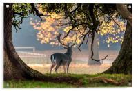 Fallow Deer at Holkham Hall, Acrylic Print
