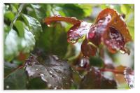 Drops of rain, Acrylic Print