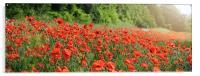 June Poppies, Acrylic Print