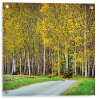 Autumn trees, Acrylic Print