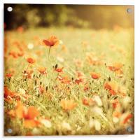 Vintage Poppy Field, Acrylic Print