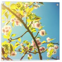 Vintage Blossom, Acrylic Print