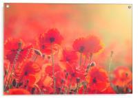 Poppies, Acrylic Print