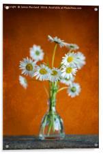 Oxeye Daisies, Acrylic Print