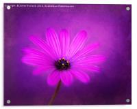 Purple Beauty, Acrylic Print