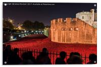 Poppies at the Tower of London, Acrylic Print
