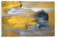 Golden Refuge , Acrylic Print