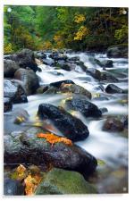 Flow of Autumn, Acrylic Print
