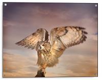 The Eagle Owl Has Landed, Acrylic Print