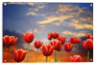 Tulip Sunset, Acrylic Print