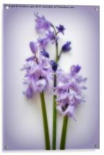 Magic Moments in Blue , Acrylic Print