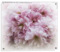 Pink Frills, Acrylic Print