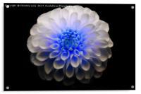 Crystal Blue, Acrylic Print