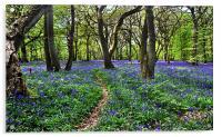 Bluebell Woods, Acrylic Print