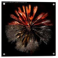 Dandelion Sunrise, Acrylic Print
