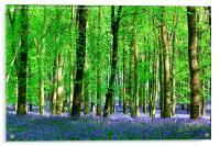 Bluebells, Acrylic Print