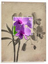 Framed Orchid's, Acrylic Print