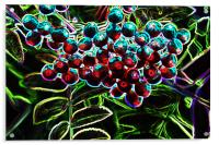Rowan Berries, Acrylic Print