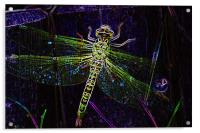 Mayfly, Acrylic Print