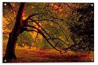 Branches, Acrylic Print