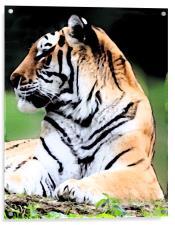 Siberian Tiger, Acrylic Print