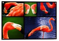 Pink Flamingos, Acrylic Print