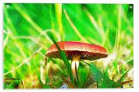 Toadstool, Acrylic Print