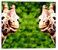 Giraffes, Acrylic Print