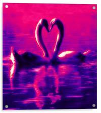 Swan Heart, Acrylic Print